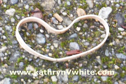 Rubber Band Heart Photo by Kathryn V. White